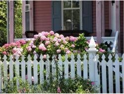 Pretty pink hydrangea flowers garden in the front yard with white frenches.JPG