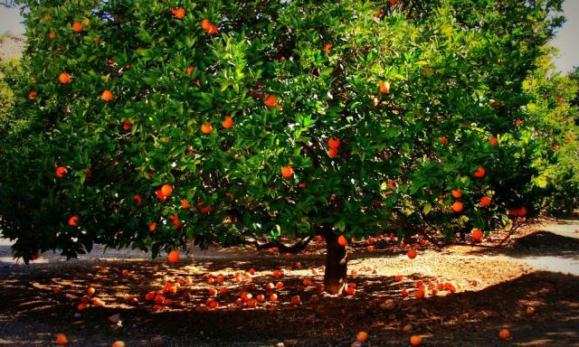 fruit trees gallery [p. ], Beautiful flower