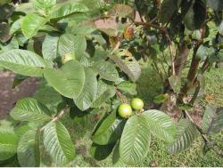 fruit tree plants.JPG
