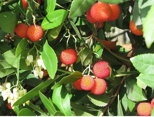 Orange Red Fruit Trees Jpg 2 Comments
