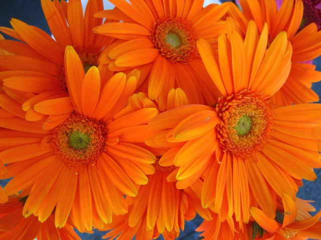 Picture of orange daisy flowers wedding flowers