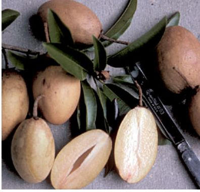Picture of Sapodilla fruits.JPG