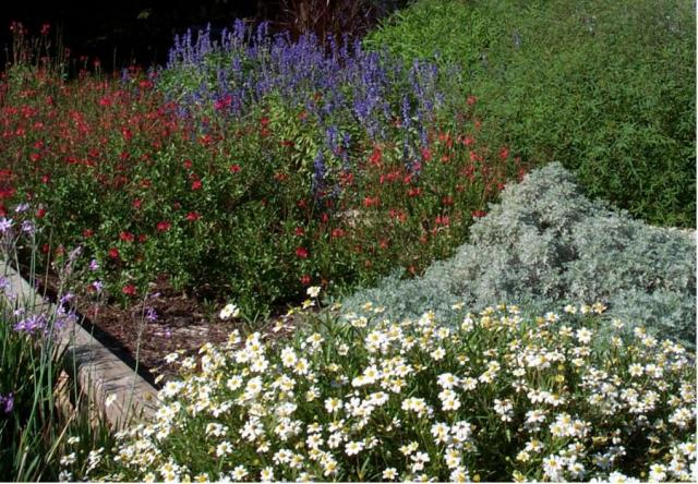 Texas Home Garden With Full Of Flowers Jpg Hi Res 720p Hd