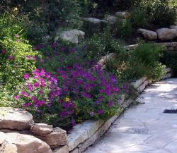 Beautiful Texas garden with bright colorful flowers.JPG