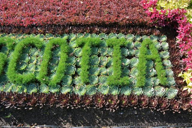 Close-upowing catcus plants making up floral sign at Halifax Public Gardens .jpg
