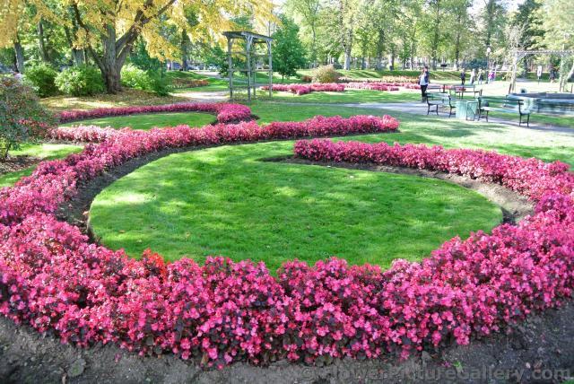 Bright circular pink flower formations at Halifax Public