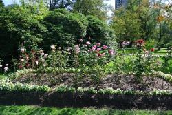 Bed of pink and red roses at Halifax Public Gardens.jpg