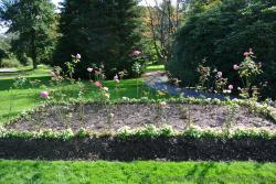 Bed of pink roses at Halifax Public Gardens.jpg
