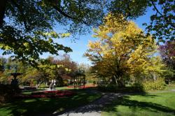 Beautiful fall scenery of yellow leaves and red flowers at Halifax Public Gardens.jpg