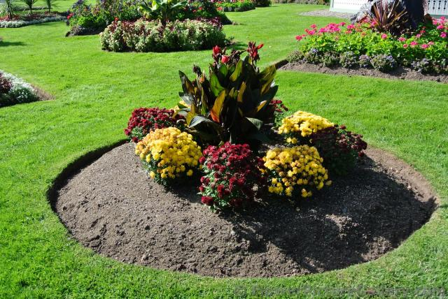 Arrangement of yellow flowers with red with green large leaf plant in the middle at Halifax Public Gardens.jpg