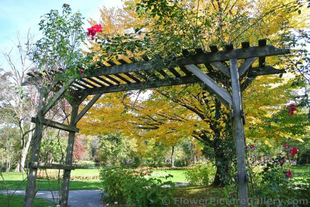 Wooden trellis in front of tree with golden leaves at Halifax Public Gardens.jpg