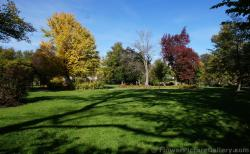 Trees with yellow and red leaves at Halifax Public Gardens.jpg