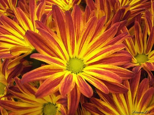 Orange and yellow daisy flowers with green centerg mightylinksfo