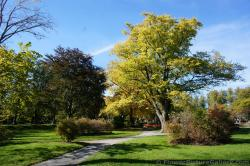 Trees with green yellow leaves at Halifax Public Gardens.jpg