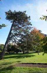 Tall leaning tree at Halifax Public Gardens.jpg