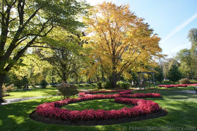 Red flowers surrounded by fall foliage at Halifax Public Gardens.jpg