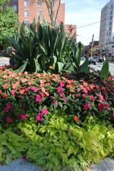Red and orange flowers arrangement outside Halifax Public Gardens.jpg