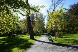 Pathway lined by trees at Halifax Public Gardens.jpg