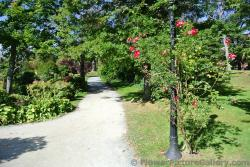 Lamp post enshrounded by red flower plant at Halifax Public Gardens.jpg
