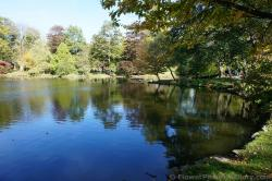 Halifax Public Gardens pond with ducks.jpg