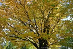 Golden leaves at Halifax Public Gardens.jpg