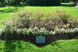 Frances Willard Centenary Bed at Halifax Public Gardens.jpg