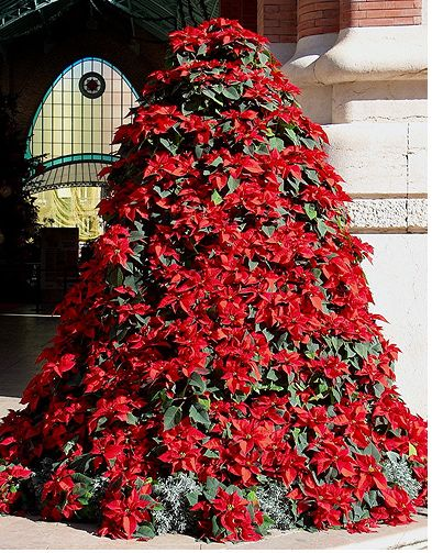 Christmas tree flowers.JPG