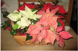 Photo of christmas flowers gifts.JPG