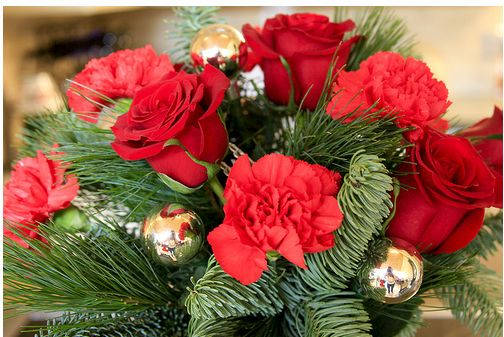 christmas flower pictures [p. ], Beautiful flower