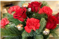 Pictures of of christmas flowers.JPG