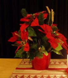 Christmas day flowers.JPG