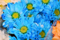 Light Blue Daisy Flowers with Many Petals and Crotchet Pattern like Yellow & Green Center.jpg