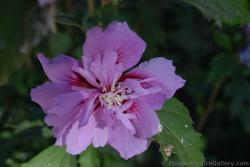 Pink Flower within a Flower from Malaga Spain.jpg