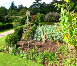 Vegetable Garden Pictures