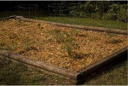 Vegetable garden box picture.PNG