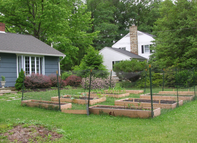 Vegetable Garden With Deer Fencing.PNG