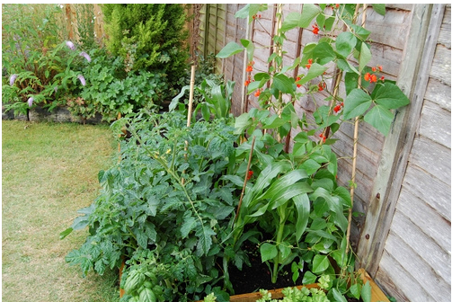 vegetable gardens pictures.PNG