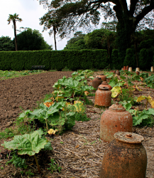 vegetable plants images.PNG