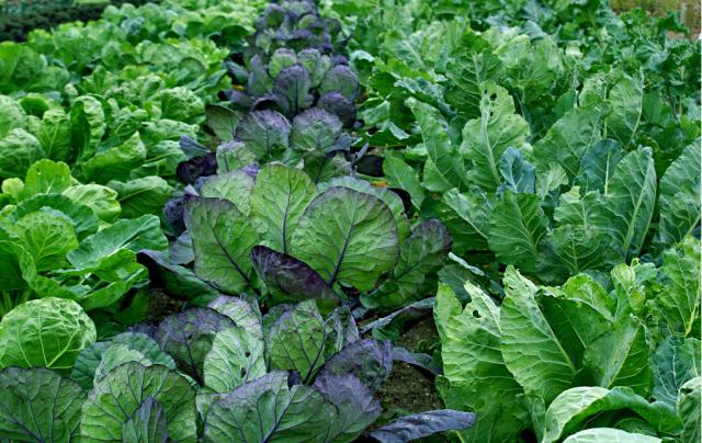 Best Vegetable GardenPNG Hi Res 720p HD