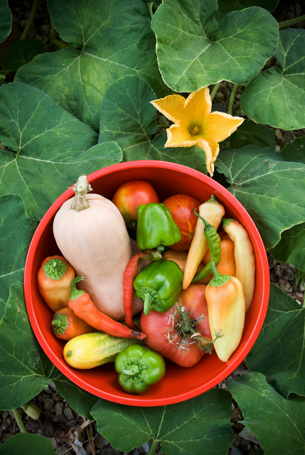 Colorful vegetables from organic garden growing.PNG