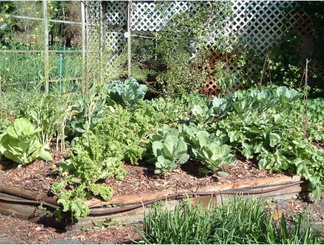 Garden vegetable pictures.PNG