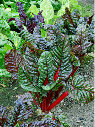 gardening vegetables image.PNG