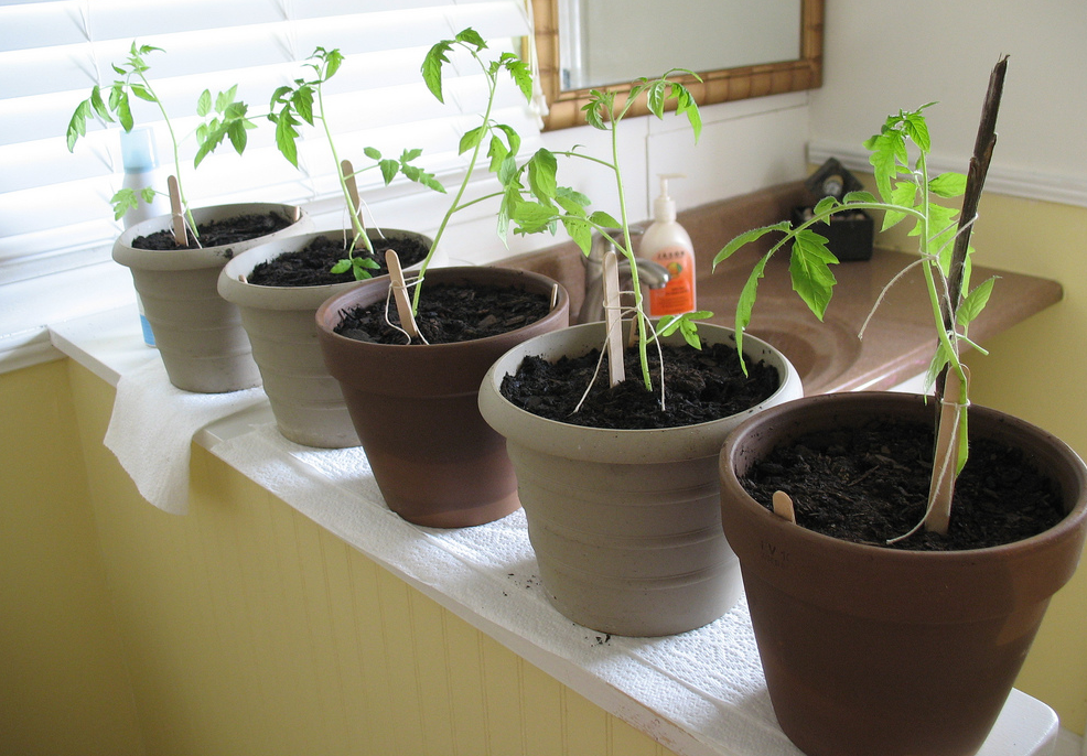 Indoor vegetable gardening_garden vegetable seeds.PNG