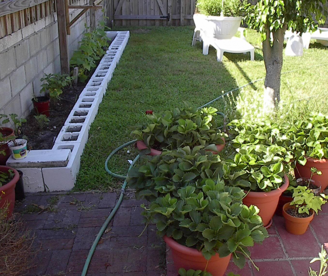 organic container gardening_growing herbs.PNG