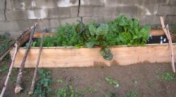 Photo fo Raised Bed Garden.PNG
