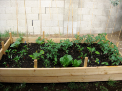 Photo of vegetable garden in big container.PNG