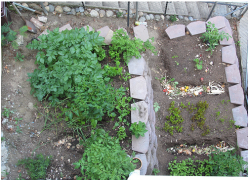 picture of vegetable garden.PNG
