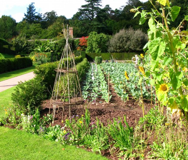 Vegetable garden planting in july