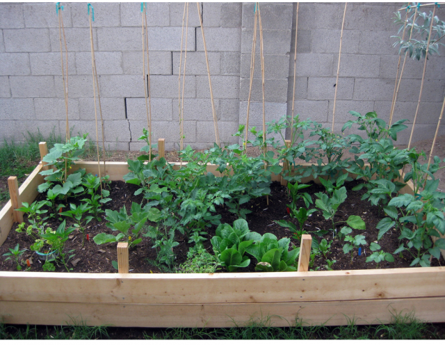 planting garden vegetables pictures.PNG