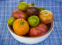 Summer Tomatoe_easy vegetable garden.PNG